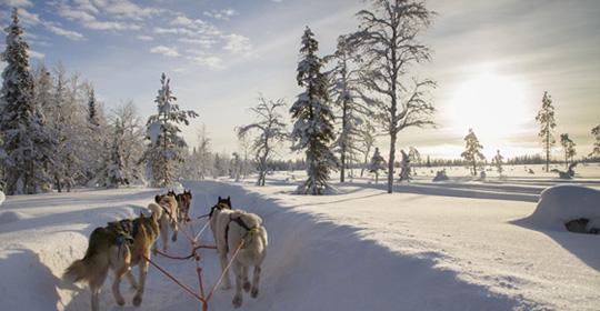 Expérience Grand Nord - Suède